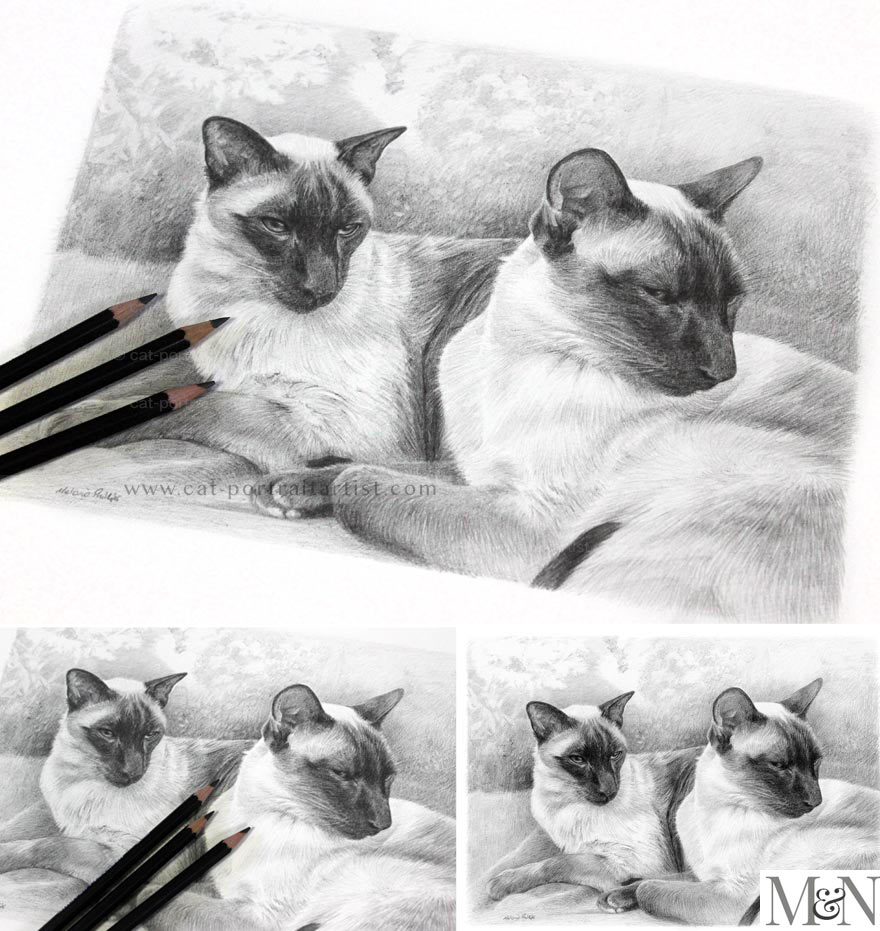 Cat Pencil Portraits