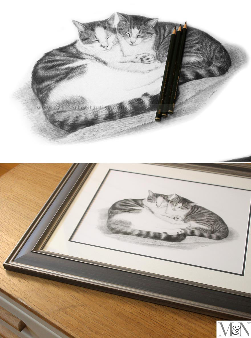 Cat Pet Portraits
