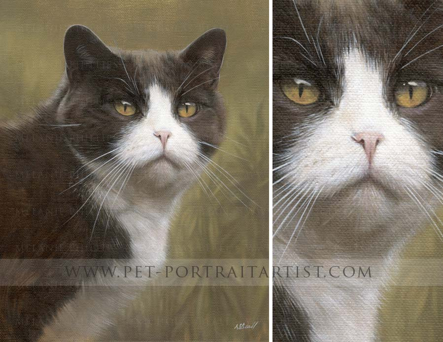 Cat Pet Portraits in Oils by Nicholas Beall