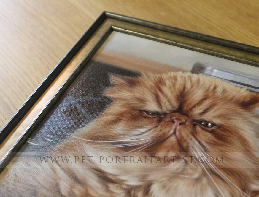 Cat Portraits Framed in Detail